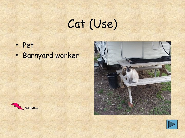 Cat (Use) • Pet • Barnyard worker Cat Button