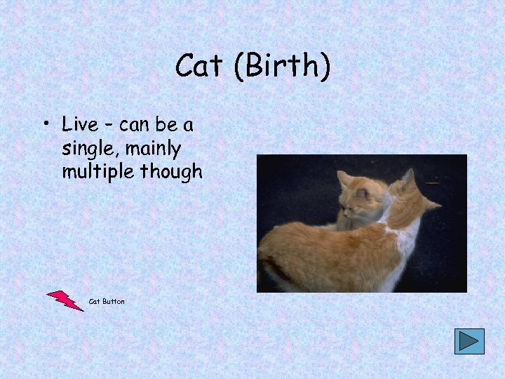 Cat (Birth) • Live – can be a single, mainly multiple though Cat Button