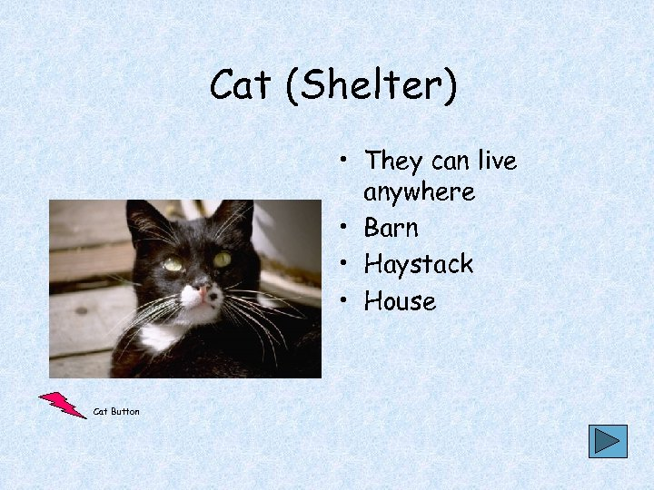 Cat (Shelter) • They can live anywhere • Barn • Haystack • House Cat