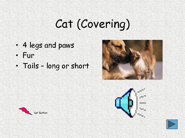 Cat (Covering) • 4 legs and paws • Fur • Tails – long or