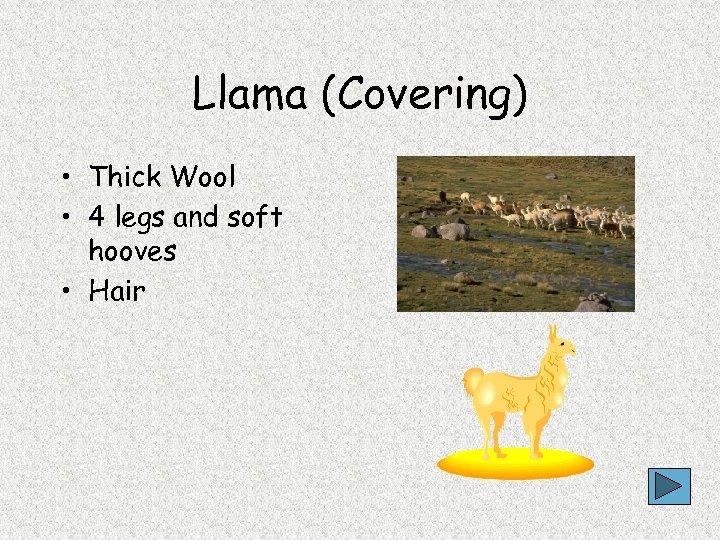 Llama (Covering) • Thick Wool • 4 legs and soft hooves • Hair