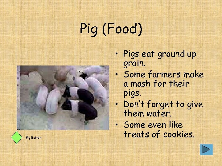 Pig (Food) Pig Button • Pigs eat ground up grain. • Some farmers make