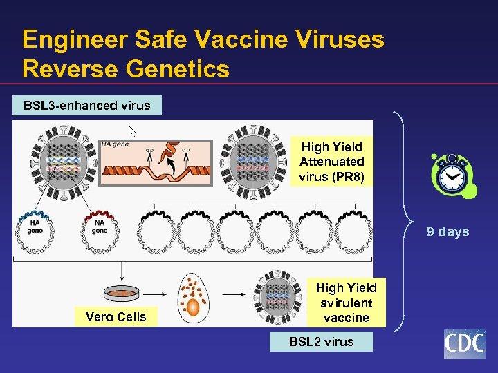 Engineer Safe Vaccine Viruses Reverse Genetics BSL 3 -enhanced virus Virulent Hemagglutinin High Yield