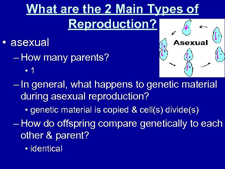 What are the 2 Main Types of Reproduction? • asexual – How many parents?