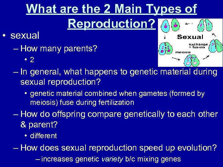 What are the 2 Main Types of Reproduction? • sexual – How many parents?