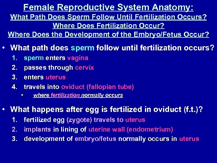 Female Reproductive System Anatomy: What Path Does Sperm Follow Until Fertilization Occurs? Where Does