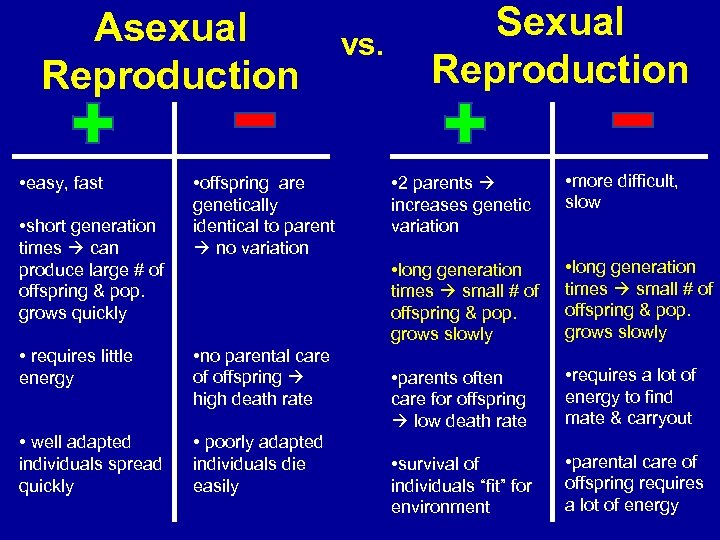 Asexual Reproduction • easy, fast • short generation times can produce large # of