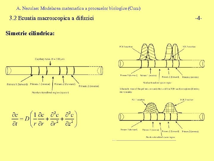 A. Neculae: Modelarea matematica a proceselor biologice (Curs) 3. 2 Ecuatia macroscopica a difuziei