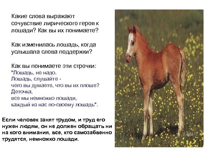 Какие слова выражают сочувствие лирического героя к лошади? Как вы их понимаете? Как изменилась