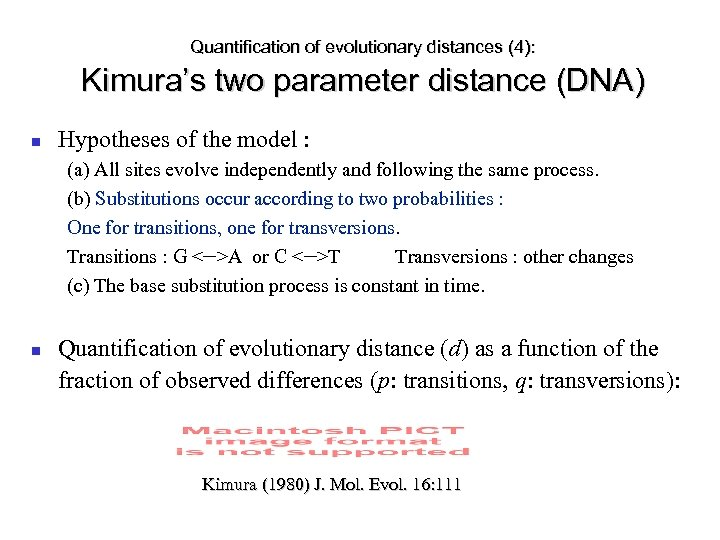 Quantification of evolutionary distances (4): Kimura's two parameter distance (DNA) Hypotheses of the model