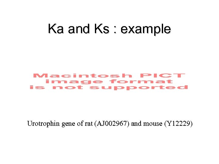 Ka and Ks : example Urotrophin gene of rat (AJ 002967) and mouse (Y