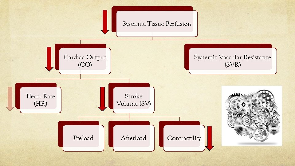 Systemic Tissue Perfusion Systemic Vascular Resistance (SVR) Cardiac Output (CO) Heart Rate (HR) Stroke