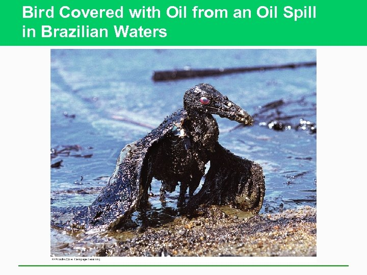 Bird Covered with Oil from an Oil Spill in Brazilian Waters