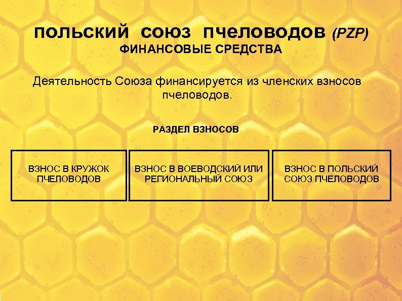 польский союз пчеловодов (PZP) ФИНАНСОВЫЕ СРЕДСТВА Деятельность Союза финансируется из членских взносов пчеловодов. РАЗДЕЛ
