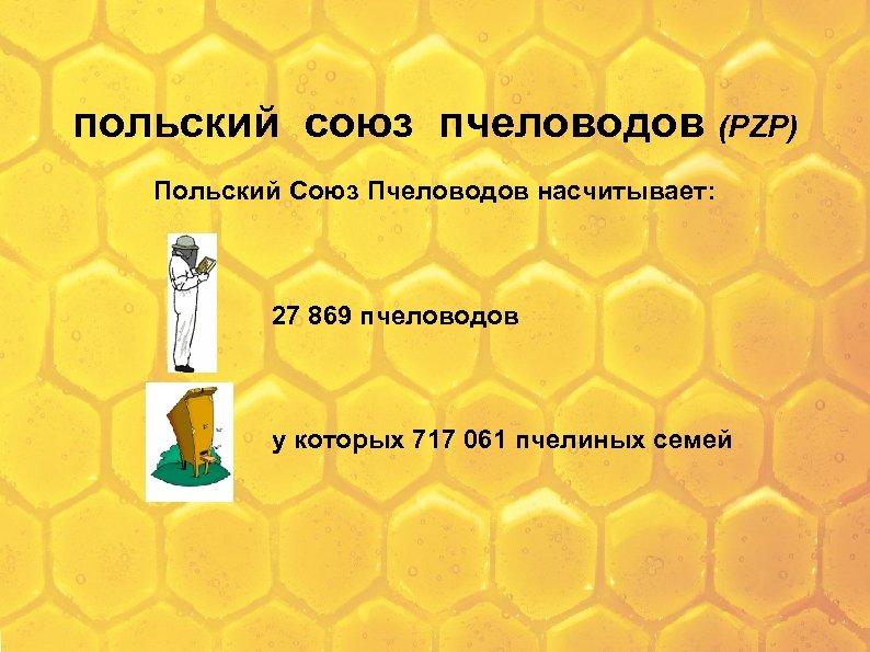 польский союз пчеловодов (PZP) Польский Союз Пчеловодов насчитывает: 27 869 пчеловодов у которых 717