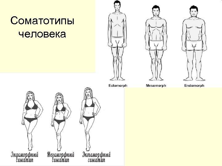 Соматотипы человека
