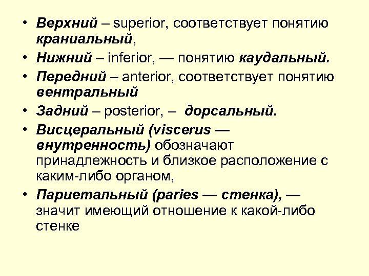• Верхний – superior, соответствует понятию краниальный, • Нижний – inferior, — понятию