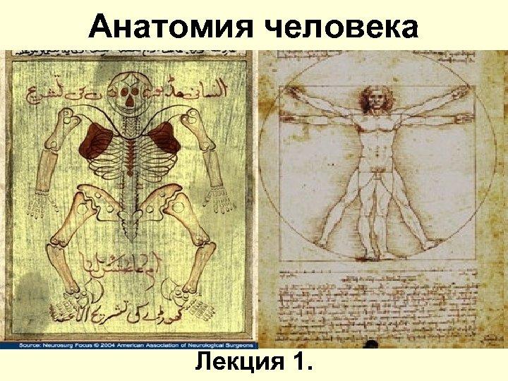 Анатомия человека Лекция 1.