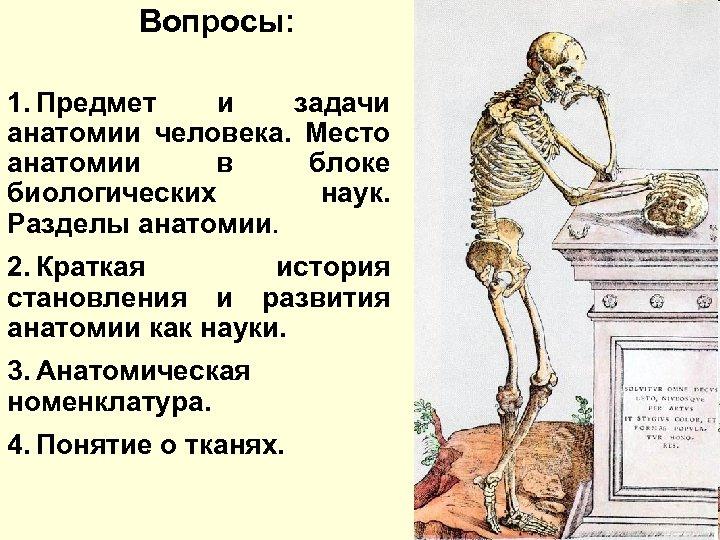 Вопросы: 1. Предмет и задачи анатомии человека. Место анатомии в блоке биологических наук. Разделы