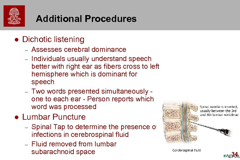 Additional Procedures l Dichotic listening – – – l Assesses cerebral dominance Individuals usually