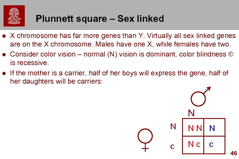 Plunnett square – Sex linked l l l X chromosome has far more genes