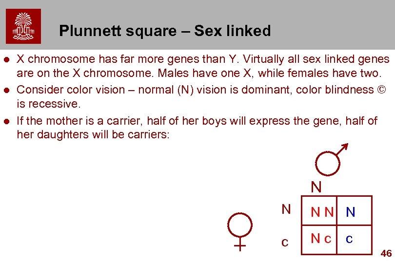 Plunnett square – Sex linked l l l X chromosome has far more genes