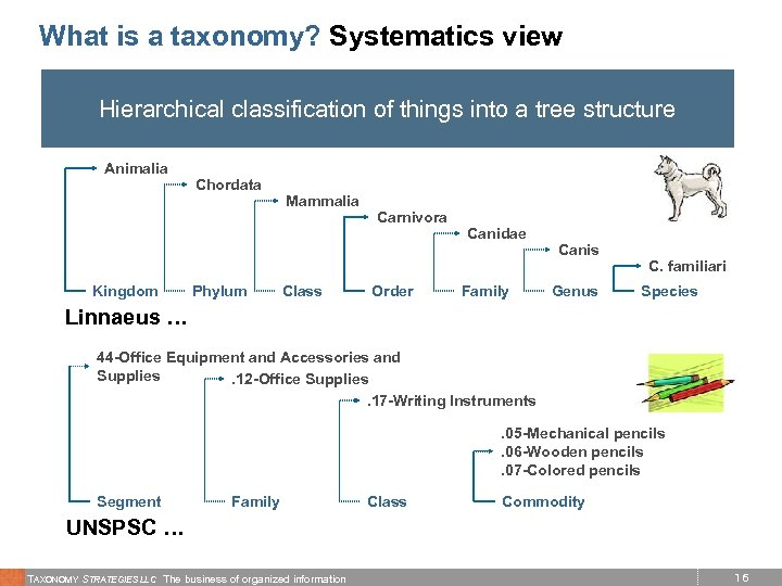 What is a taxonomy? Systematics view Hierarchical classification of things into a tree structure