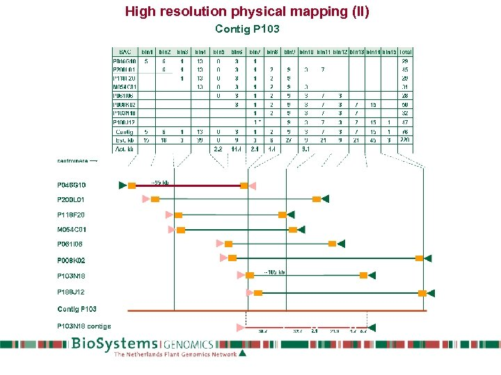 High resolution physical mapping (II) Contig P 103