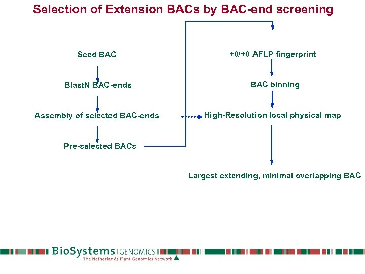 Selection of Extension BACs by BAC-end screening Seed BAC +0/+0 AFLP fingerprint Blast. N