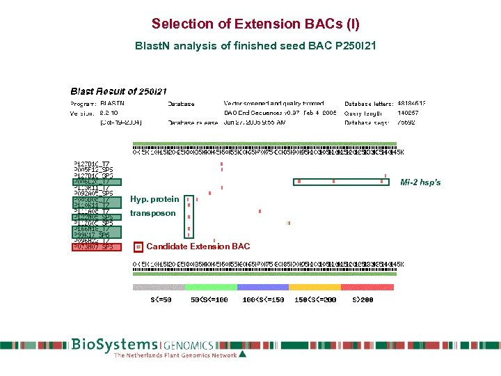 Selection of Extension BACs (I) Blast. N analysis of finished seed BAC P 250