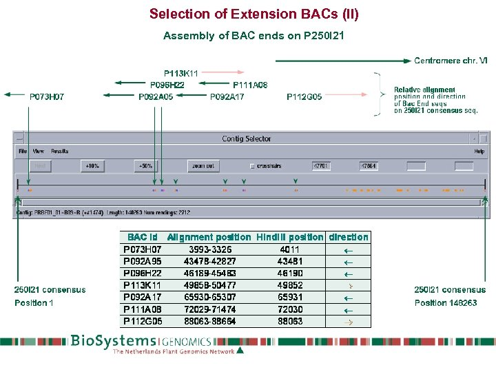 Selection of Extension BACs (II) Assembly of BAC ends on P 250 I 21