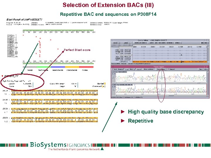 Selection of Extension BACs (III) Repetitive BAC end sequences on P 308 F 14