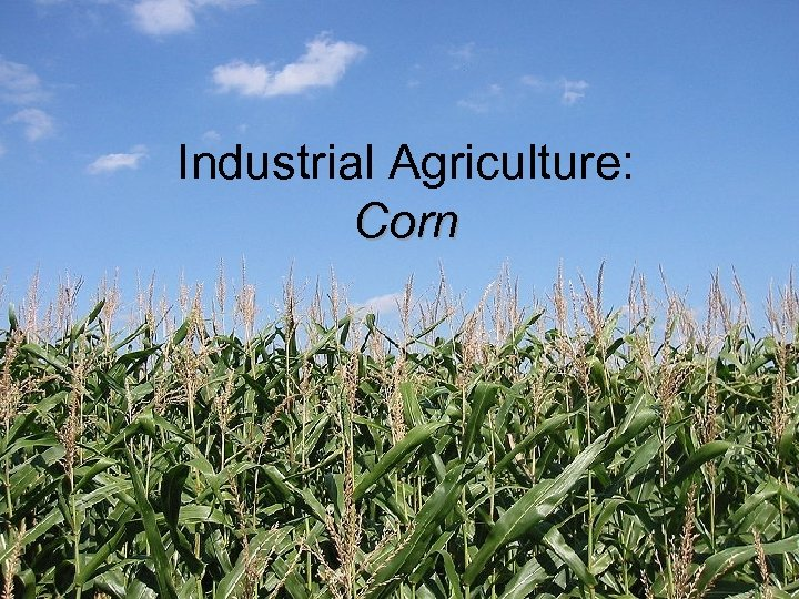 Industrial Agriculture: Corn
