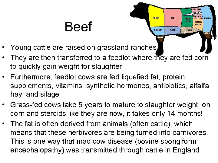 Beef • Young cattle are raised on grassland ranches • They are then transferred