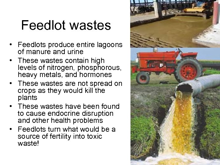 Feedlot wastes • Feedlots produce entire lagoons of manure and urine • These wastes