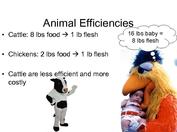 Animal Efficiencies • Cattle: 8 lbs food 1 lb flesh • Chickens: 2 lbs