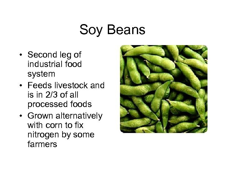 Soy Beans • Second leg of industrial food system • Feeds livestock and is