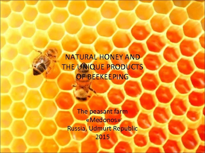 NATURAL HONEY AND THE UNIQUE PRODUCTS OF BEEKEEPING The peasant farm «Medonos» Russia, Udmurt