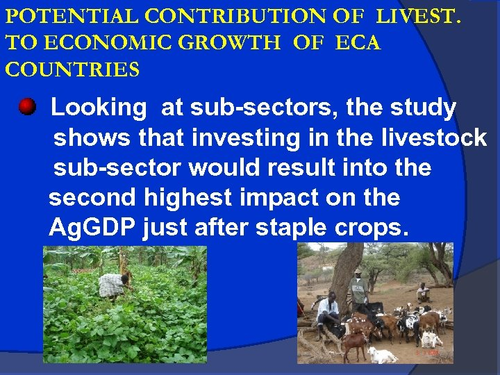 POTENTIAL CONTRIBUTION OF LIVEST. TO ECONOMIC GROWTH OF ECA COUNTRIES Looking at sub-sectors, the