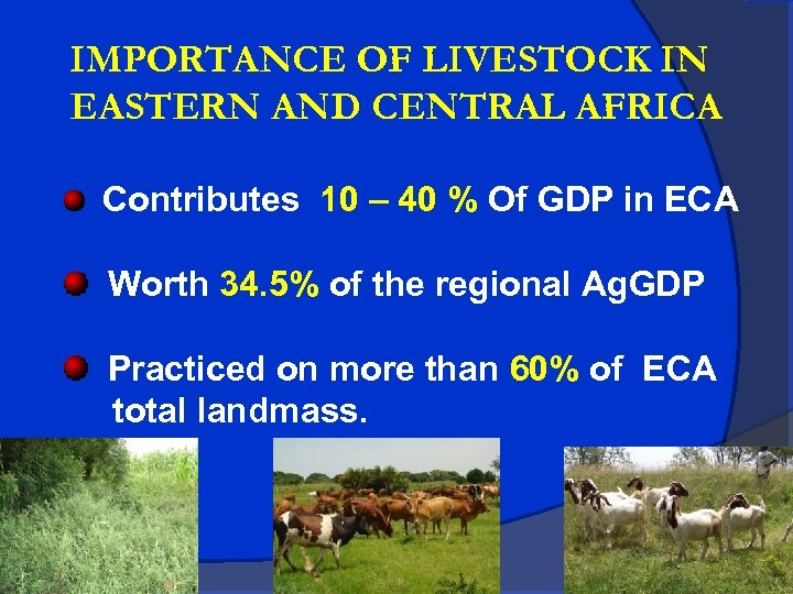 IMPORTANCE OF LIVESTOCK IN EASTERN AND CENTRAL AFRICA Contributes 10 – 40 % Of