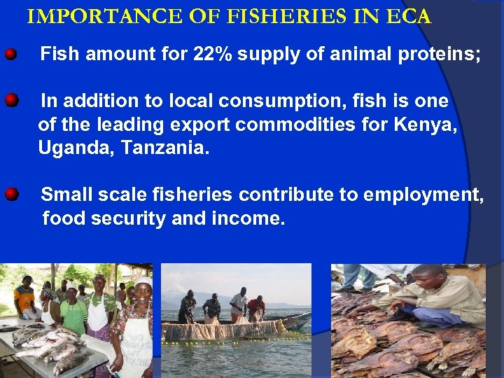 IMPORTANCE OF FISHERIES IN ECA Fish amount for 22% supply of animal proteins; In