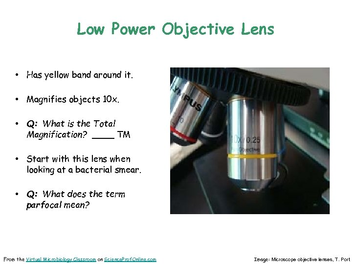 Low Power Objective Lens • Has yellow band around it. • Magnifies objects 10