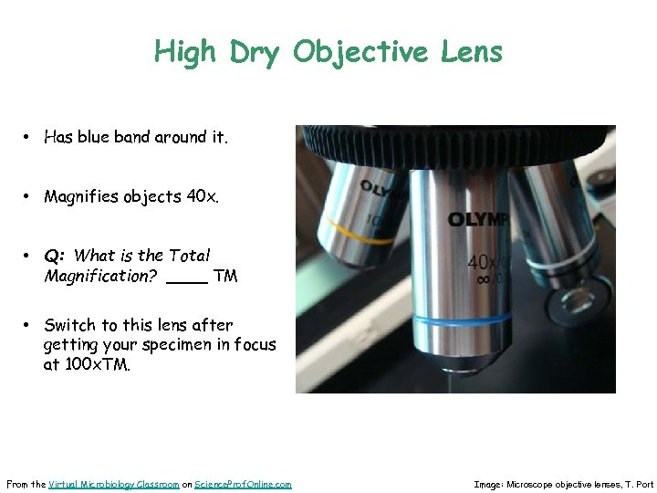 High Dry Objective Lens • Has blue band around it. • Magnifies objects 40