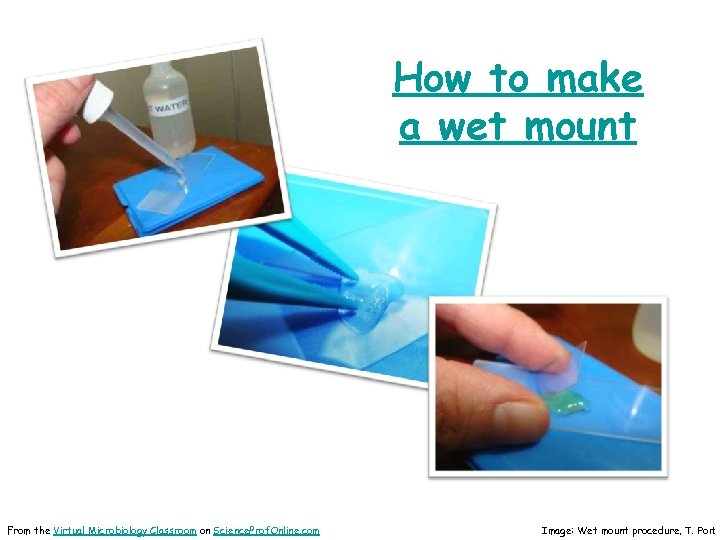 How to make a wet mount From the Virtual Microbiology Classroom on Science. Prof.