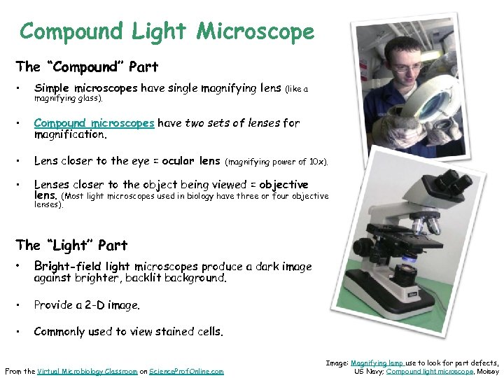 """Compound Light Microscope The """"Compound"""" Part • Simple microscopes have single magnifying lens •"""