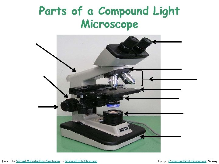 Parts of a Compound Light Microscope From the Virtual Microbiology Classroom on Science. Prof.