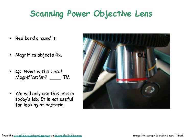 Scanning Power Objective Lens • Red band around it. • Magnifies objects 4 x.