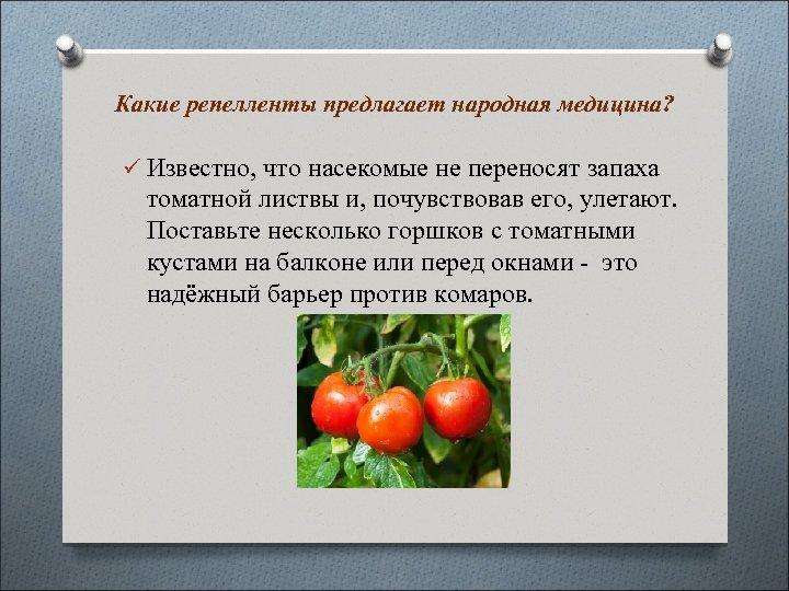 Какие репелленты предлагает народная медицина? ü Известно, что насекомые не переносят запаха томатной листвы