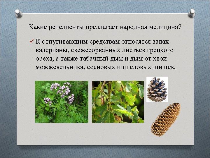 Какие репелленты предлагает народная медицина? ü К отпугивающим средствам относятся запах валерианы, свежесорванных листьев