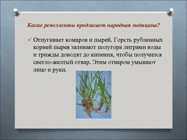 Какие репелленты предлагает народная медицина? ü Отпугивает комаров и пырей. Горсть рубленных корней пырея